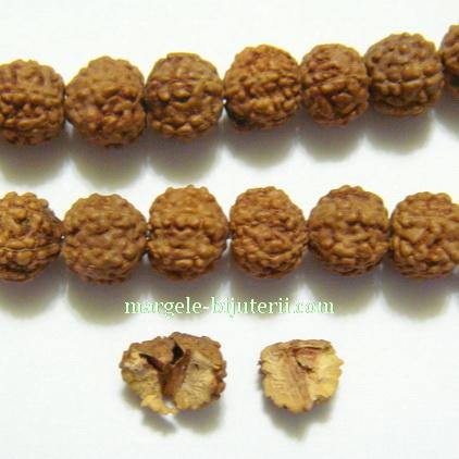 Margele, seminte de rudraksha, maro, 5 muchii, 9-9.5mm 1 buc