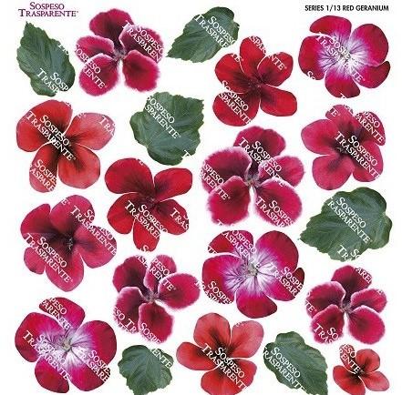 Folie imprimata Sospeso Trasparente 1/13 Red Geranium 1 buc