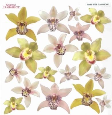 Folie imprimata Sospeso Trasparente 4/08 Star Orchid 1 buc