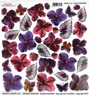 Folie imprimata Sospeso Trasparente 5/15 Black Geranium 1 buc