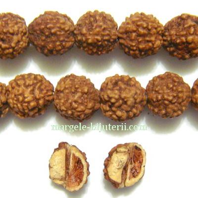 Margele, seminte de rudraksha, maro, cu 5 muchii, 8-9mm 1 buc